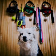 Кучешки принадлежности