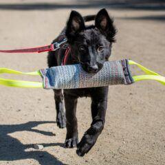Играчки за кучета и аксесоари за тренировка