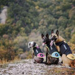 Дрехи за кучета