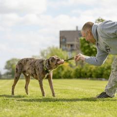 Обучение на кучета